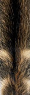 Finn Raccoon